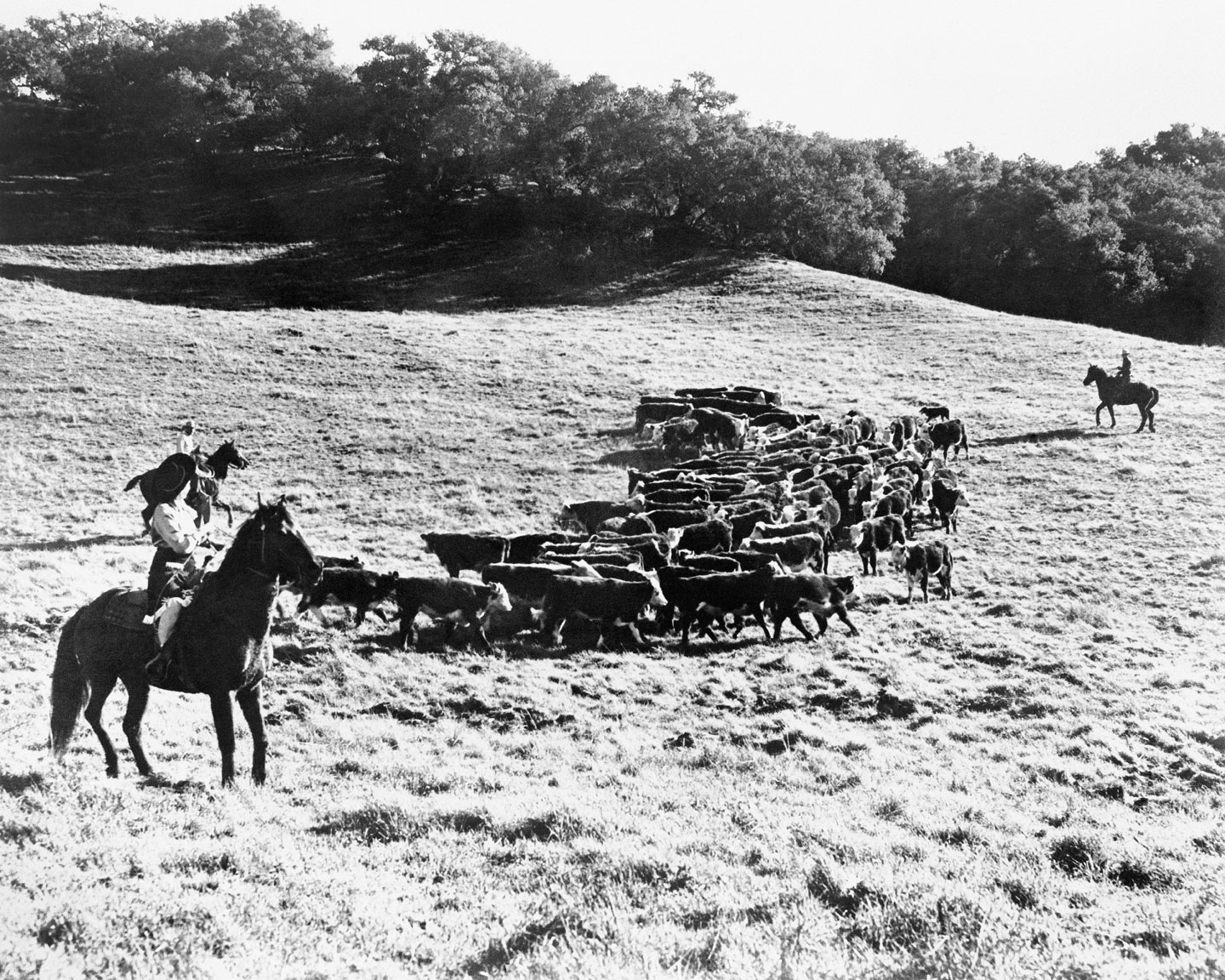 Cowboys working on The Alisal Ranch