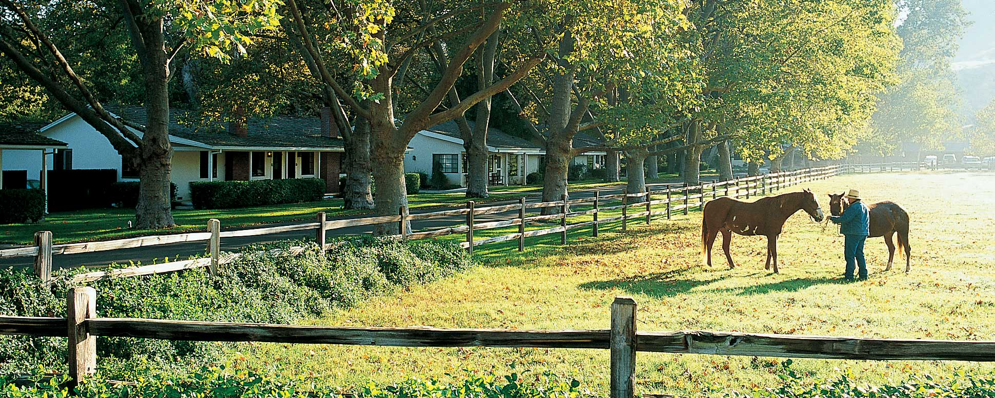Horses in the front pasture with a trainer at the Alisal Guest Ranch & Resort in Solvang California