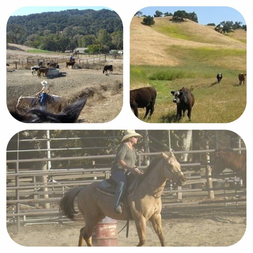 Alisal Guest Ranch and Resort - Guest Experience