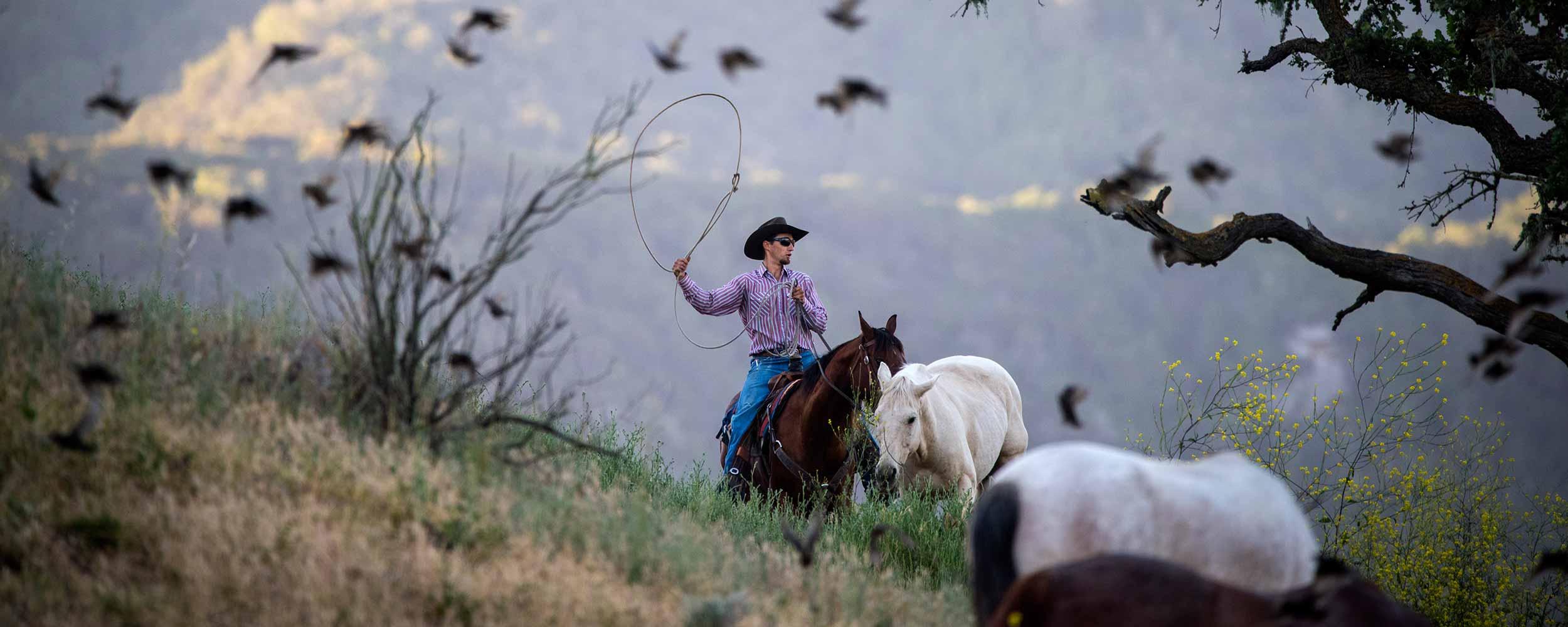 horse wrangling at Alisal Ranch - Alisal Resort in Solvang California