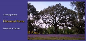 Clairmont Lavender Farms - favorite wine country visit