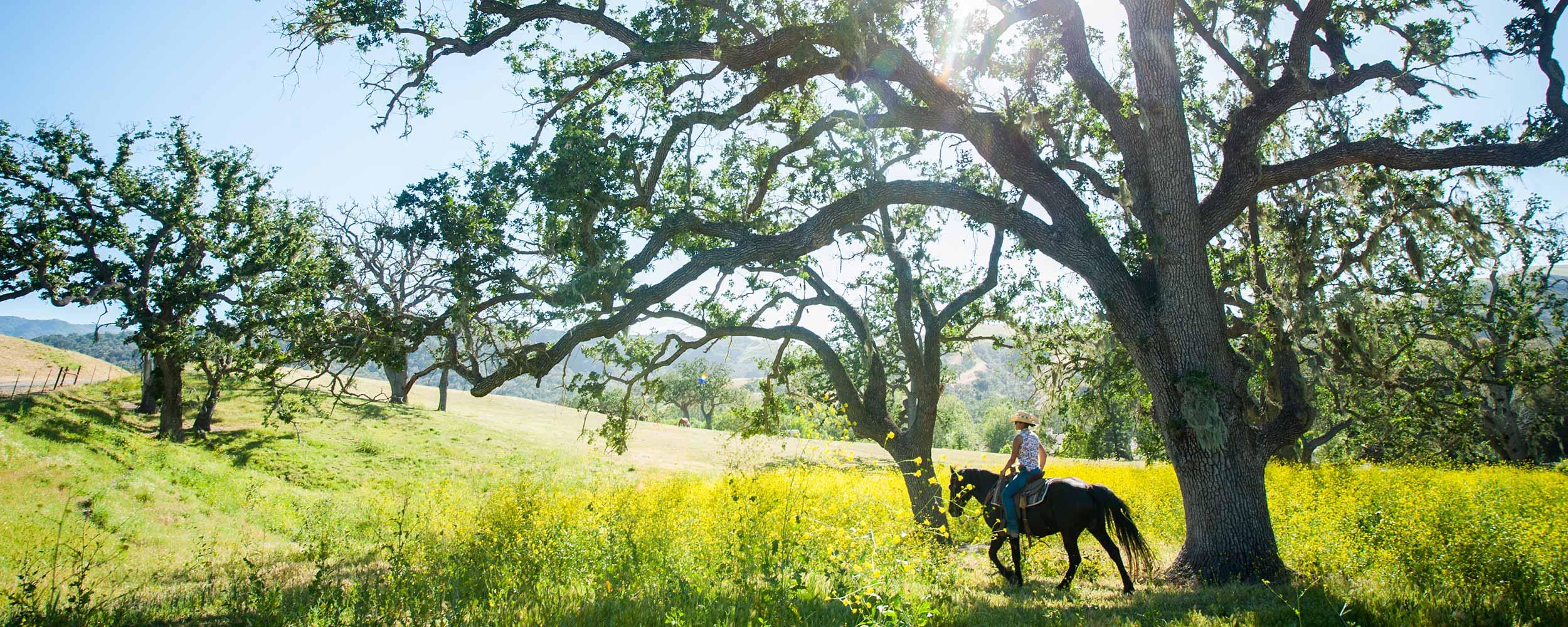horseback riding under Alisal oaks - Alisal Resort in Solvang California