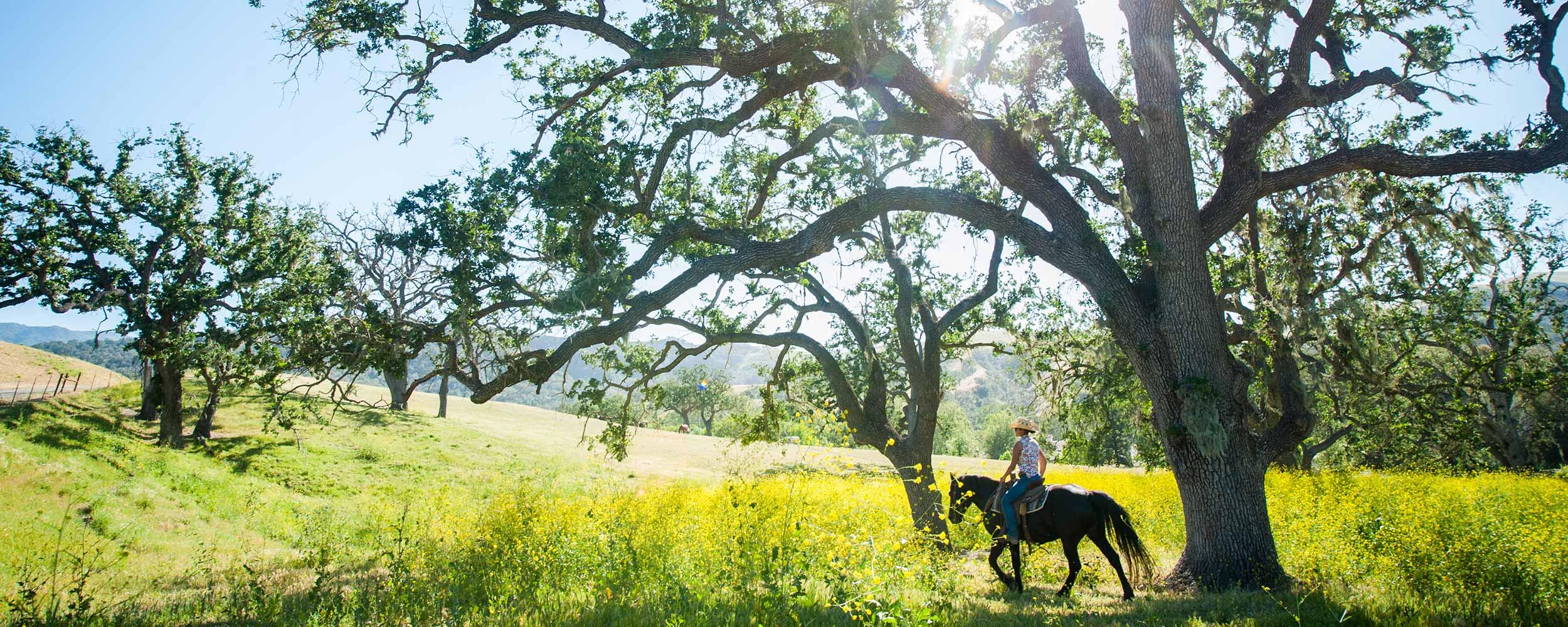 horseback riding at Alisal - Alisal Resort in Solvang California