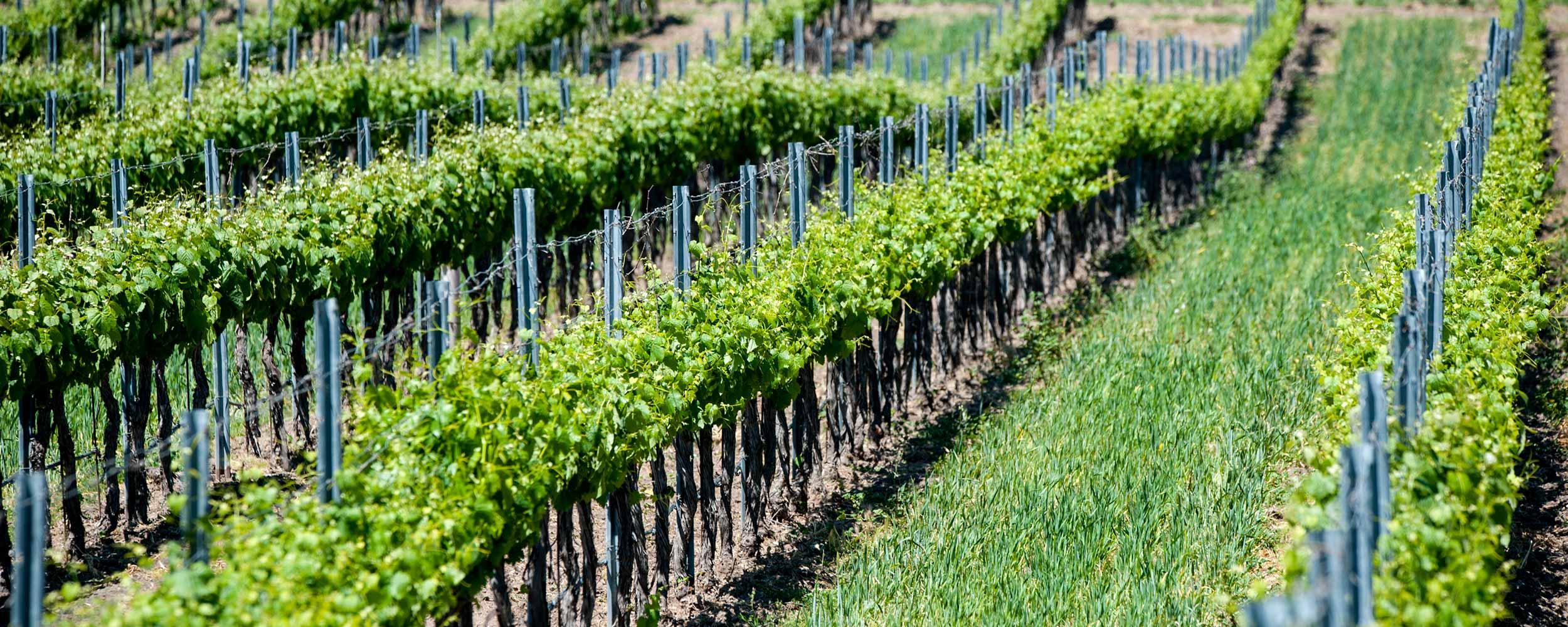 Santa Barbara wine country - Alisal Resort in Solvang California
