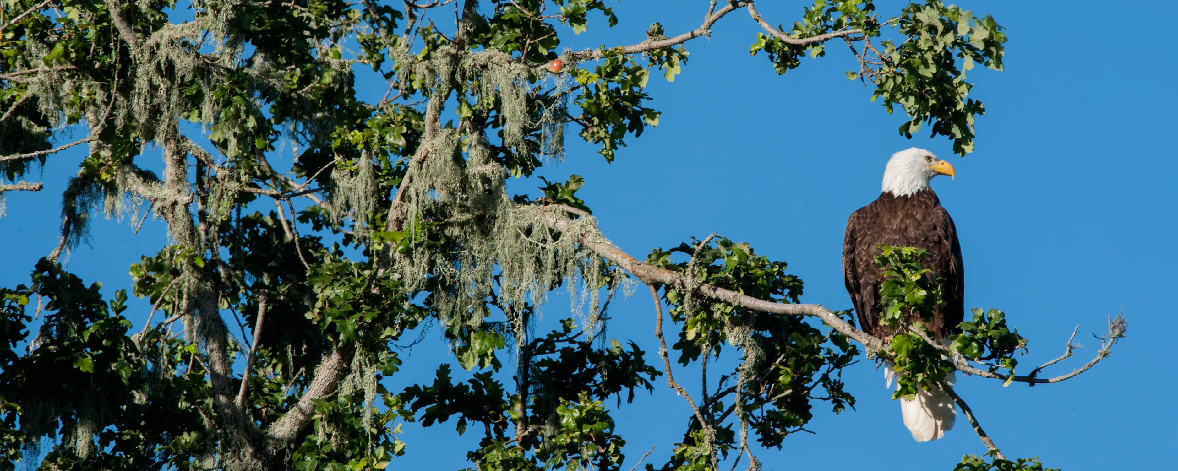 birdwatching at Alisal - Alisal Resort in Solvang California