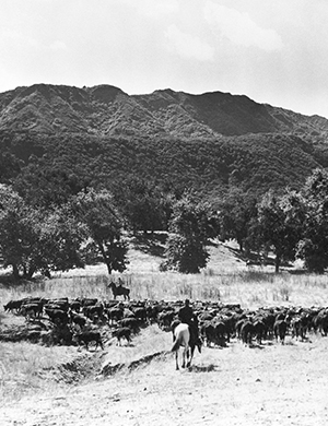 The history of Alisal Guest Ranch