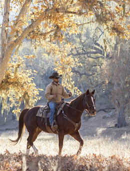 man riding horse in autumn at Alisal