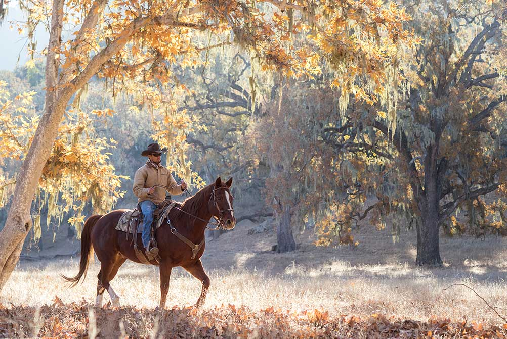 Cowboy on horseback in the Sycamore Grove at Alisal Guest Ranch in the fall
