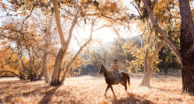 Horseback Riding in the fall