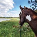 Horse Tales