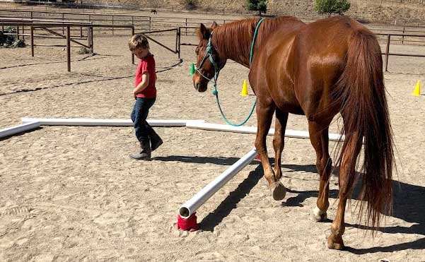 A young boy leading a horse around some obstacles at the Alisal Guest Ranch
