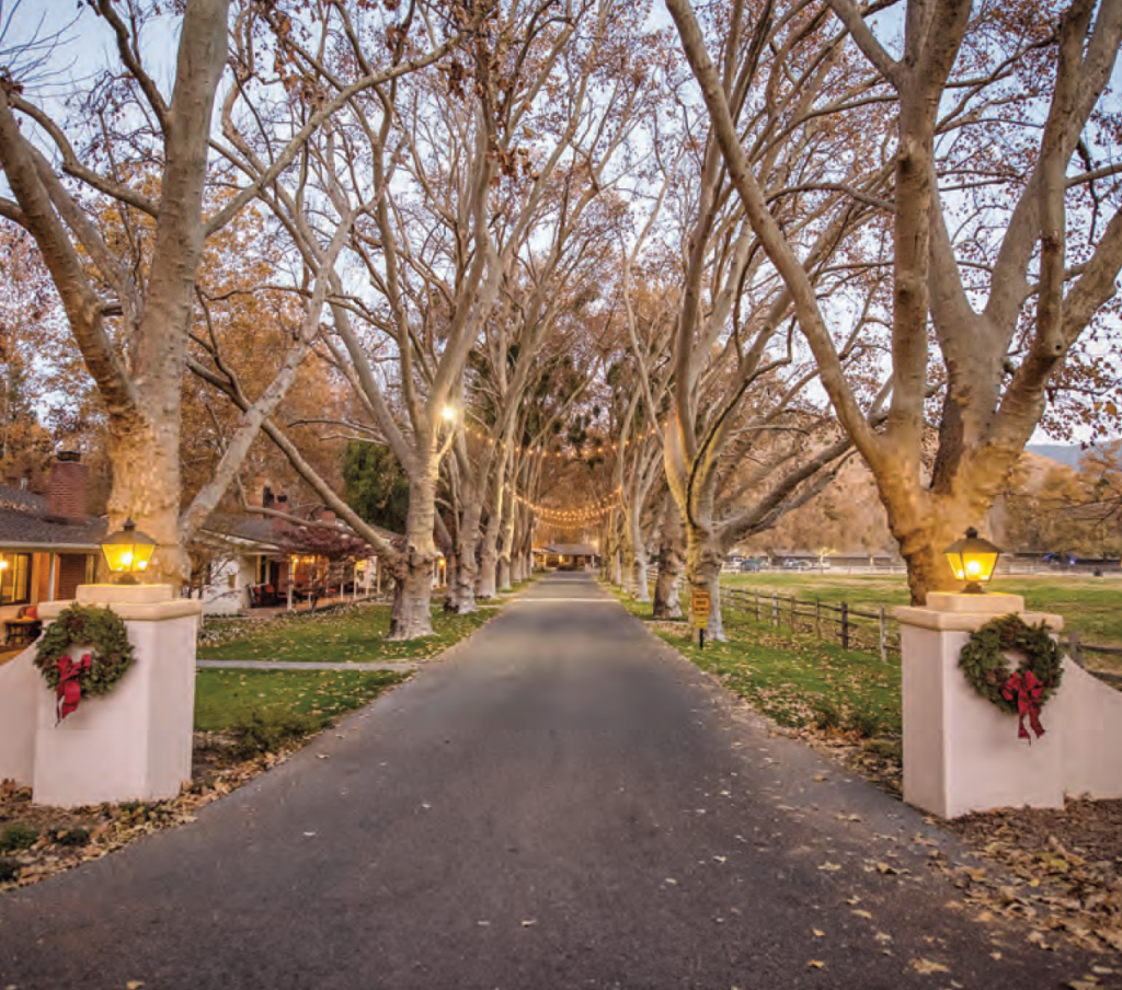 The main drive at Alisal Guest Ranch decorated with holiday lights