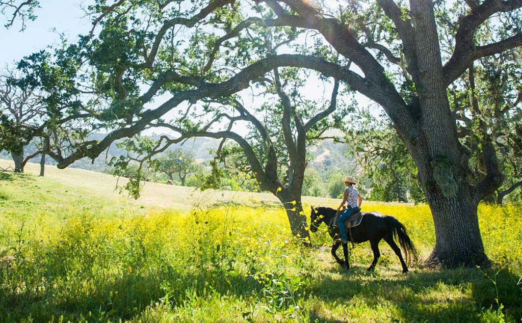 Woman on horseback riding under a big tree at Alisal Guest Ranch & Resort